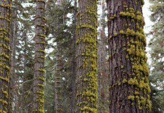 Colombia bosque