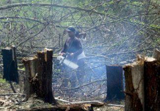 Deforestación, Colombia, Iván Duque