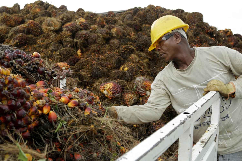 Sindemia, aceite de palma, malnutrición