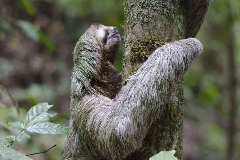Amazonía, Colombia
