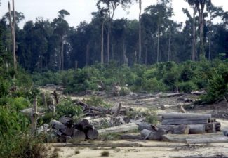 lucha deforestación