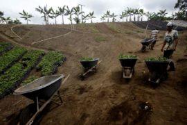 restitución de tierras