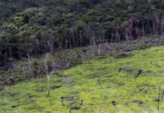 #JuicioALaDeforestación