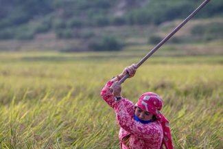 Mercados campesinos justicia alimentaria