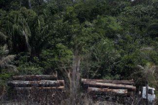 Casino deforestación