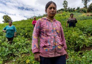 género acceso a tierras